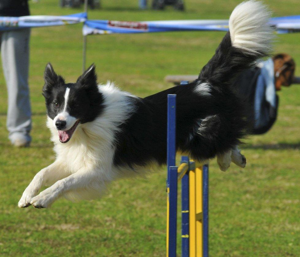 Belgioioso, iscrizioni aperte per la gara di agility dog