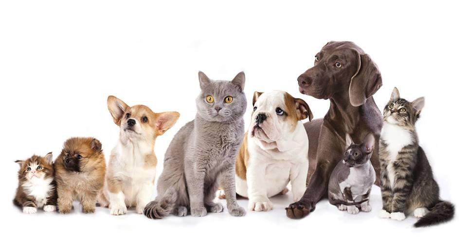 Cani e gatti a Montanaro
