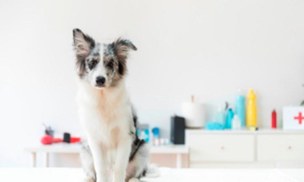 Pet Therapy e Yoga in carrozzina al CTO
