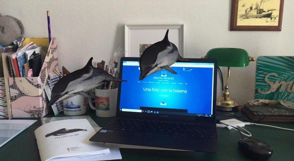 Delfini in salotto con