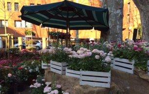Floralia in piazza San Marco