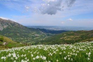 Sagra del Narciso a Castelnuovo Nigra