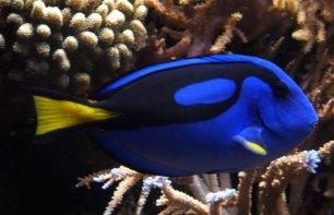 Aquarium Show al MiCo