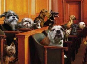 Corteo da piazza Cadorna per la modifica del Codice Civile in materia di animali