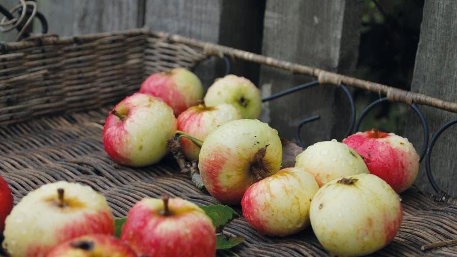 """Nei campi si butta il 20% della frutta e verdura. Da Naturasì e Legambiente """"Cosìpernatura"""", meno perfetti, m…"""