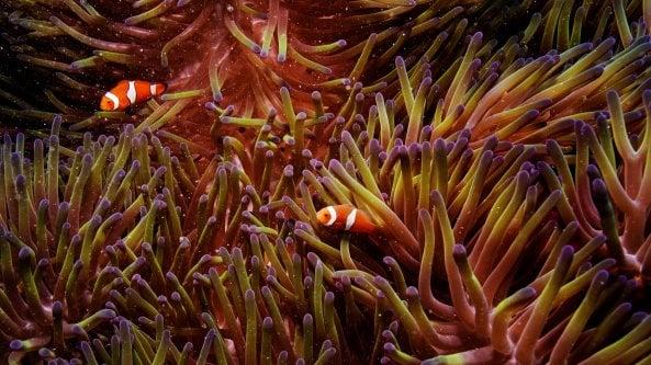 Australia, scoperta unenorme barriera corallina. È più alta dellEmpire State Building
