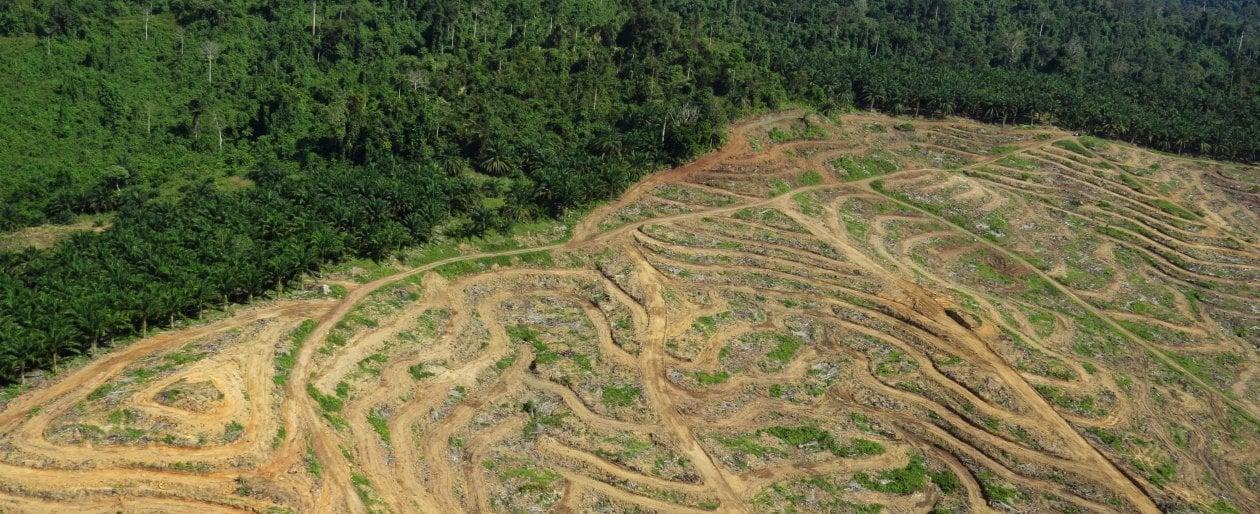 Deforestazione, l'Ue al secondo posto per import dopo la Cina