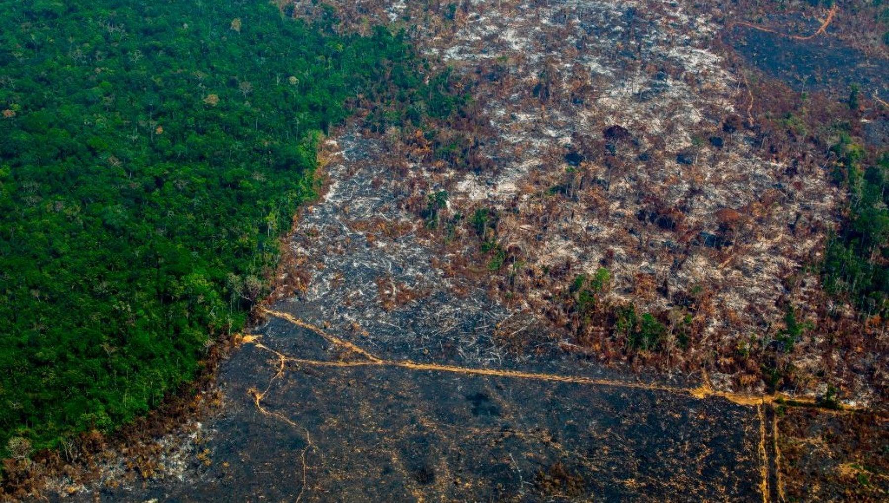 L'Amazzonia rilascia più CO2 di quanta ne riesca ad assorbire