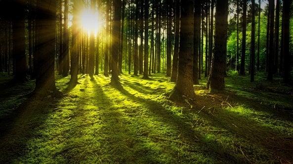 Una foresta spontanea grande quanto la Francia