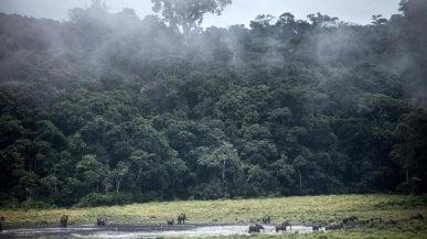 Africa, la resilienza delle foreste: assorbono 1,1 miliardi di tonnellate di CO2 allanno