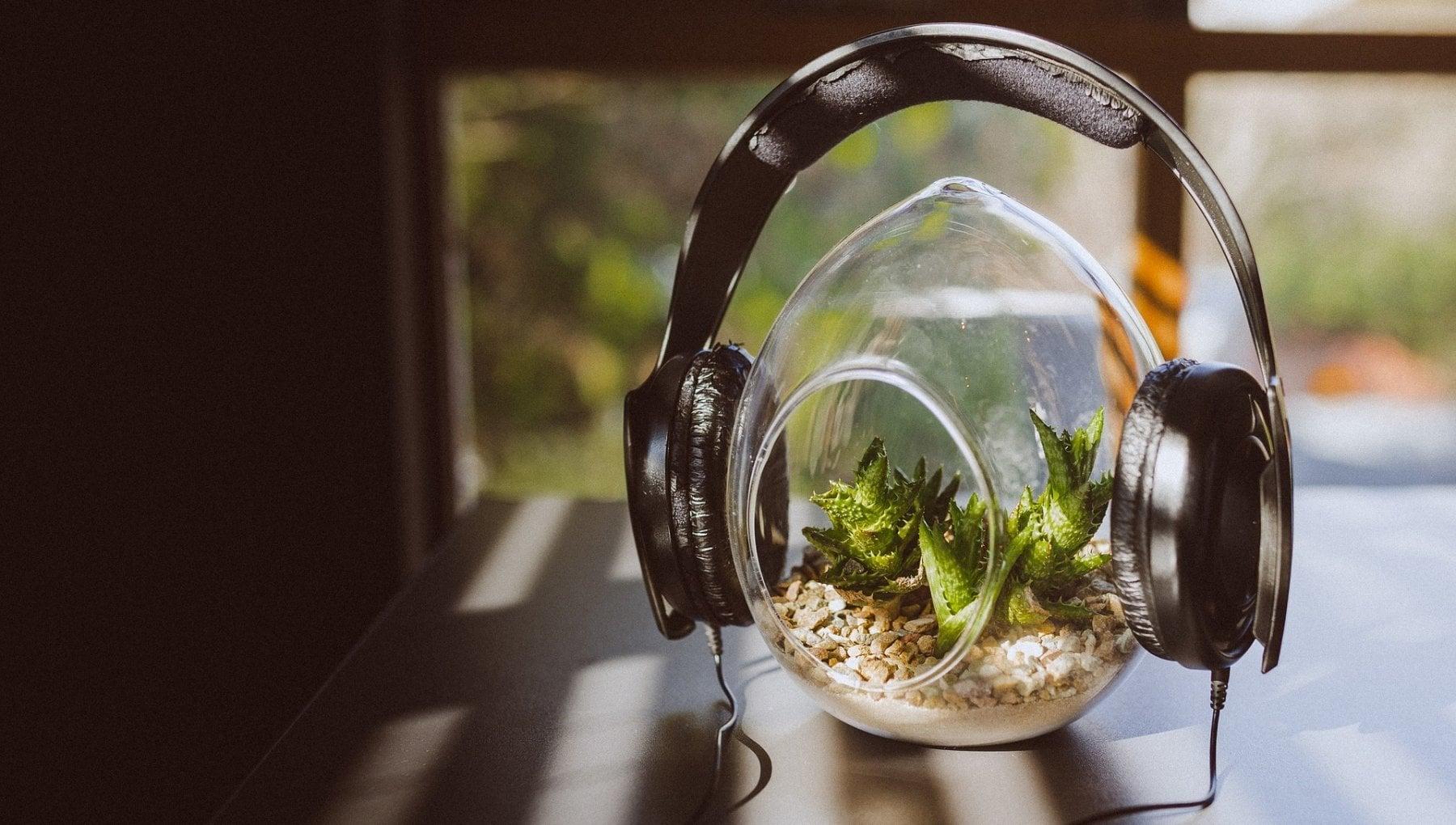 La musica che piace alle piante? Vince pop