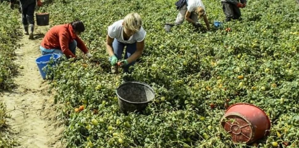 Italiane schiave nei campi