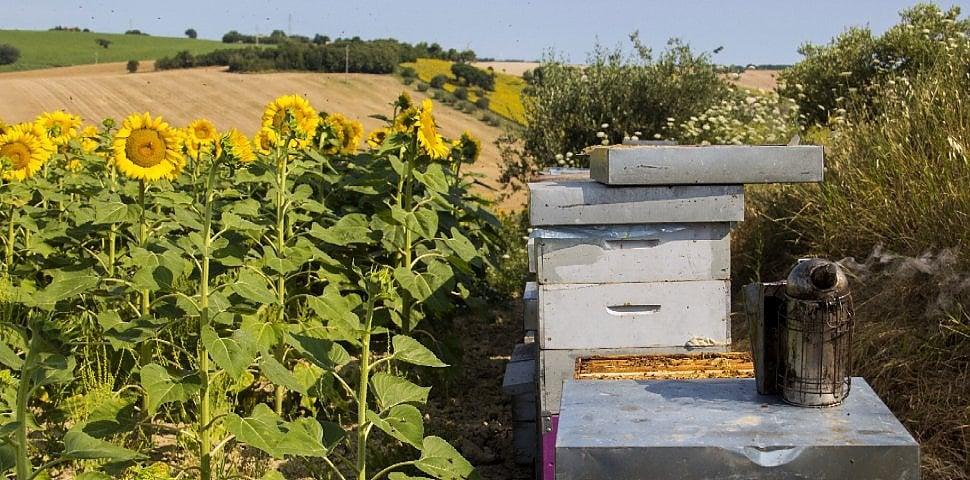 I pastori delle api