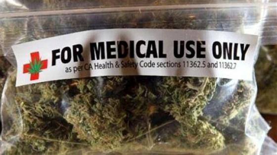 """Regione Puglia, sì alla coltivazione di cannabis terapeutica. """"Andiamo incontro a chi soffre"""""""