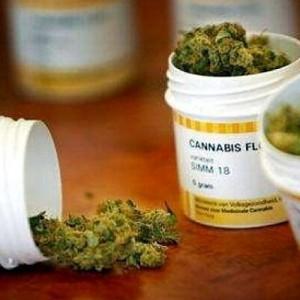 La cannabis terapeutica made in Puglia è legge