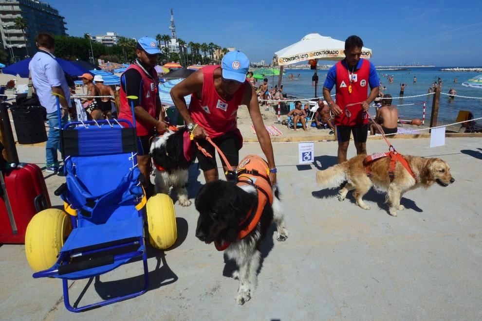I cani-bagnini in azione, soccorso un uomo - la Repubblica