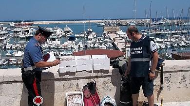 Datteri e novellame a Bisceglie  sequestro ai predoni del mare