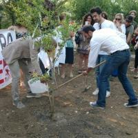 Vandali alla pineta San Francesco, sradicato e rubato l'albero dedicato a Borsellino