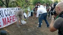 Vandali nella pineta  sradicato e rubato l'albero dedicato a Borsellino