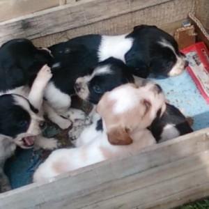 Bruciò quattro cuccioli abbandonati e salvati dai volontari, un anno di  carcere