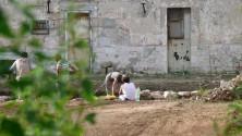 Palese, dal terreno  di una vecchia villa  spunta un villaggio  del Neolitico  -   Le foto