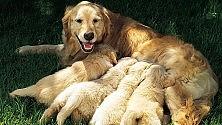 Animali, 50 euro  dal Comune di Bari per sterilizzare i cani