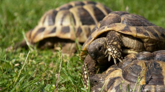tartarughe in giardino scatta la multa da 15mila euro On tartarughe in giardino