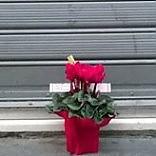 Piante contro le bombe le associazioni di Foggia si ribellano al racket