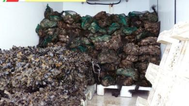 Foto   - Taranto, tavole sicure a Natale distrutta una tonnellata di ostriche