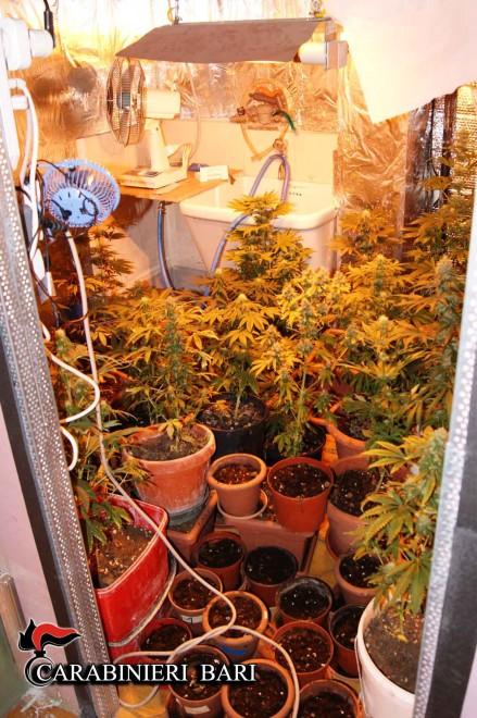 Marijuana fai da te la serra nel garage 1 di 1 bari for Piani di garage fai da te