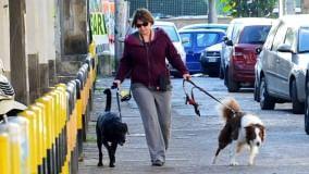 Video    /  Con gli 007 delle cacche dei cani   Con due animali, multa da 600 euro     Foto       di FRANCESCA RUSSI