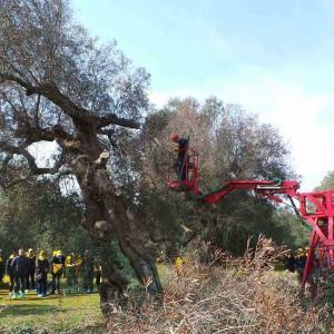 """Xylella, Boscia (Cnr): """"Impossibile sradicare tutte piante malate, interventi solo nel nord Salento e a Oria"""""""