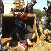 Xylella, ambientalisti non fermano le ruspe: tagliati i primi alberi malati