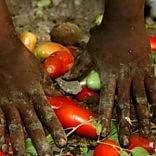 """La moglie del sudanese  morto nei campi sotto l'afa """"Una vita da schiavo"""""""