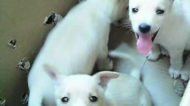 Foto  Fasano, salvati in spiaggia i tre cuccioli sigillati nel cartone