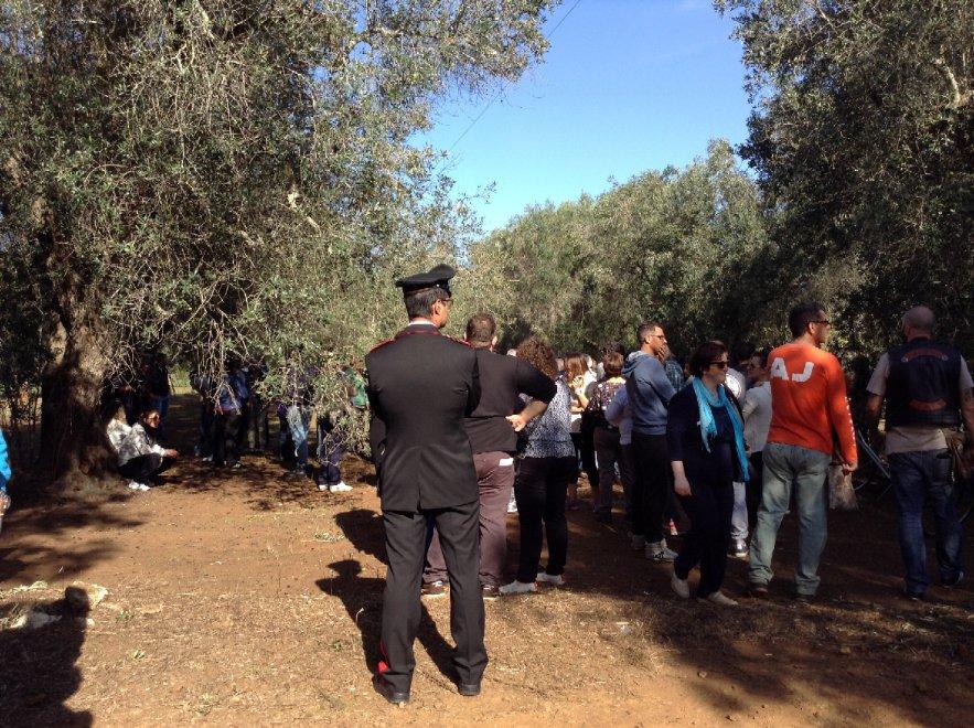 Xylella, nel Brindisino la protesta ferma i tagli degli ulivi
