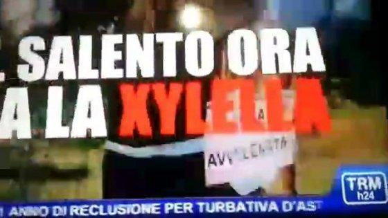 """Xylella, lo spot anti Salento: """"Loro hanno il batterio"""". Emiliano s'infuria, l'azienda si scusa"""
