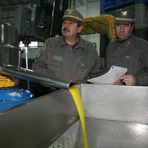 Puglia, falso made in Italy su 7mila tonnellate di olio d'oliva: sei indagati per la maxi truffa