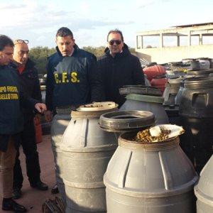 Bari sotto sequestro 500 tonnellate di olive da tavola erano conservate male - Tipi di olive da tavola ...