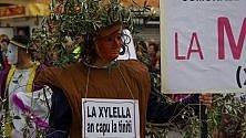 Xylella, il Carnevale   col funerale degli ulivi