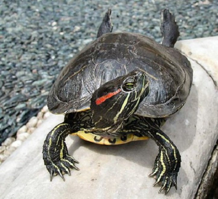 Tartarughe scatta il sequestro in una casa del tarantino for Stagno per tartarughe