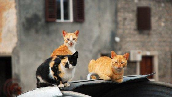 """Lecce, decine di gatti uccisi col veleno. Il Comune: """"Aiutateci a trovare e punire i responsabili"""""""