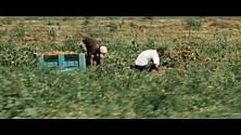 'Santi Caporali', il film sui ghetti dei braccianti