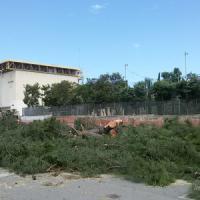 Bari, abbattuti 18 pini maestosi per realizzare due rotatorie: la protesta