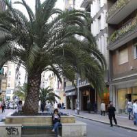Bari, Decaro al comitato contro il restyling di via Sparano:
