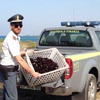 Porto Cesareo, pescano duemila ricci nell'area marina protetta: tre pescatori