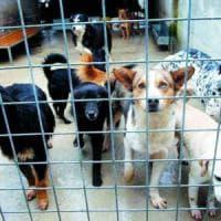 Cani, a Bari sos del Comune:
