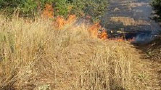 Puglia, fiamme nel Parco dell'Alta Murgia: distrutti centinaia di ettari di bosco