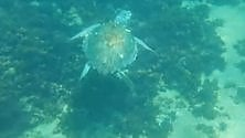 Sorpresa per i sub in mare con le tartarughe