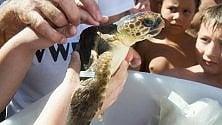 Brindisi, la tartaruga Federica torna in libertà
